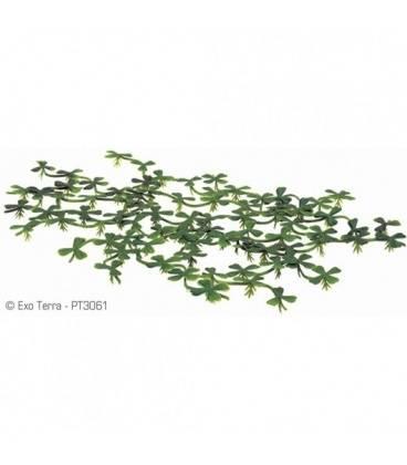Plantas Foltantes EXOTERRA 15 cm