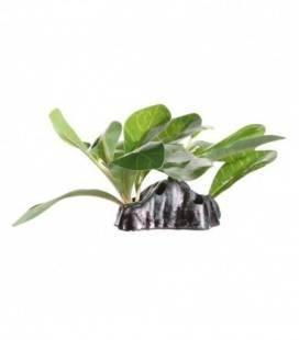 Cactus Jade EXOTERRA