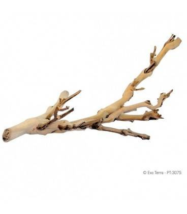 Forest Branch EXOTERRA