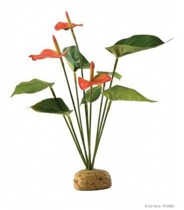 Planta Arbusto Anthurium EXOTERRA
