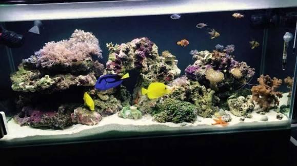 5 Consejos para montar un acuario de agua salada