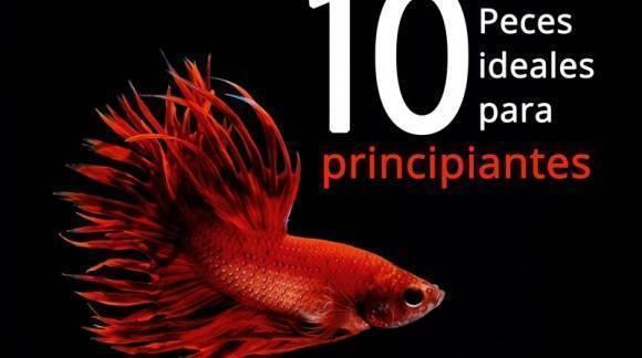 10 Peces para principiantes