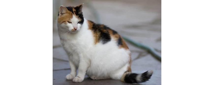 Cosas que tienes que saber si tienes una gata embarazada