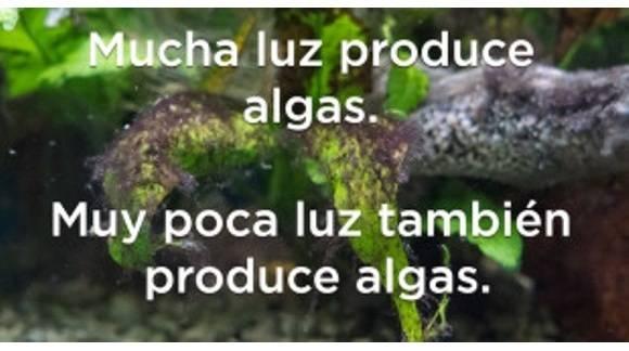 Algas en acuarios: la pesadilla de todo acuarista