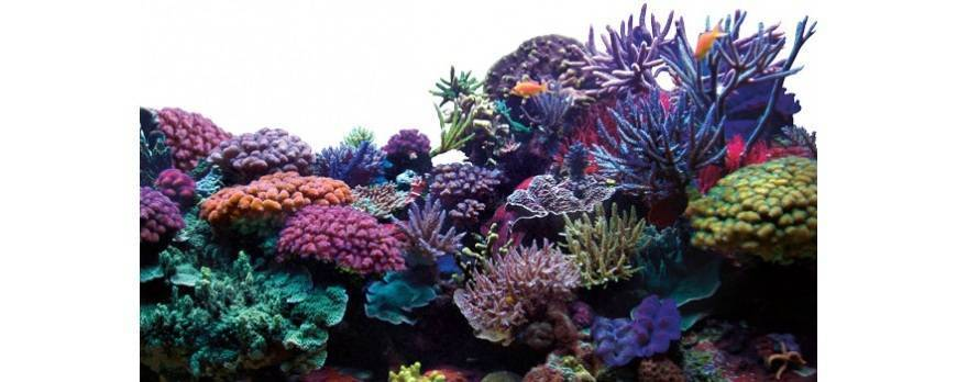 Cómo montar un acuario de arrecife