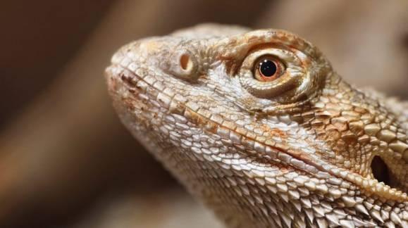 Consecuencias de la falta de calor para reptiles en invierno