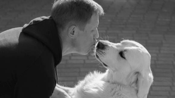 Consejos sobre perros a tener en cuenta