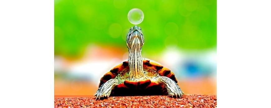 Guía de iluminación para reptiles Exo Terra ¿Qué necesito saber de la luz?