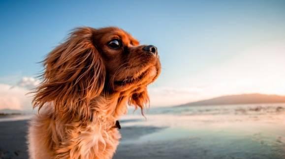 Imprescindibles para un día de playa con tu perro