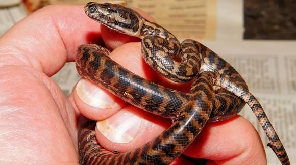 Cuidados que necesita una serpiente como animal de compañía