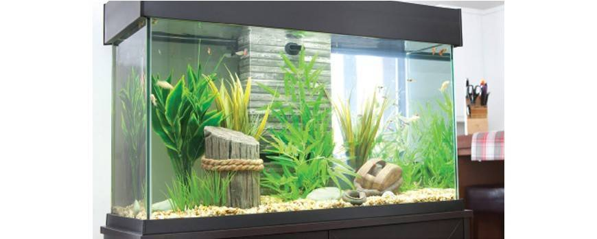 8 consejos para tu primer acuario