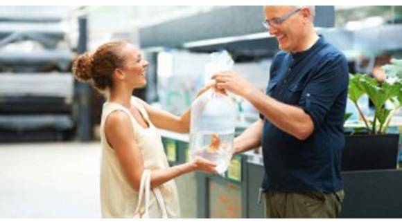 6 consejos para introducir peces nuevos al acuario