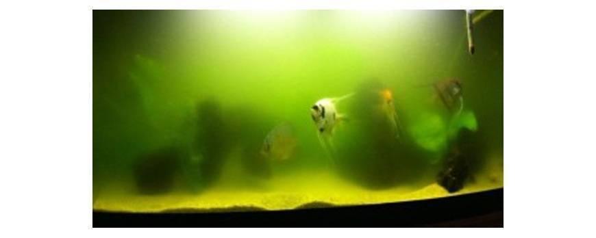 5 problemas comunes en los acuarios